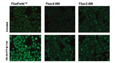 Enzo活细胞荧光染色——钙离子检测试剂盒 FluoForte®-试剂盒