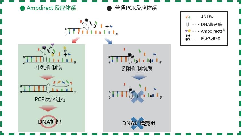 60421469无需DNA抽提新型PCR扩增缓冲液-缓冲液