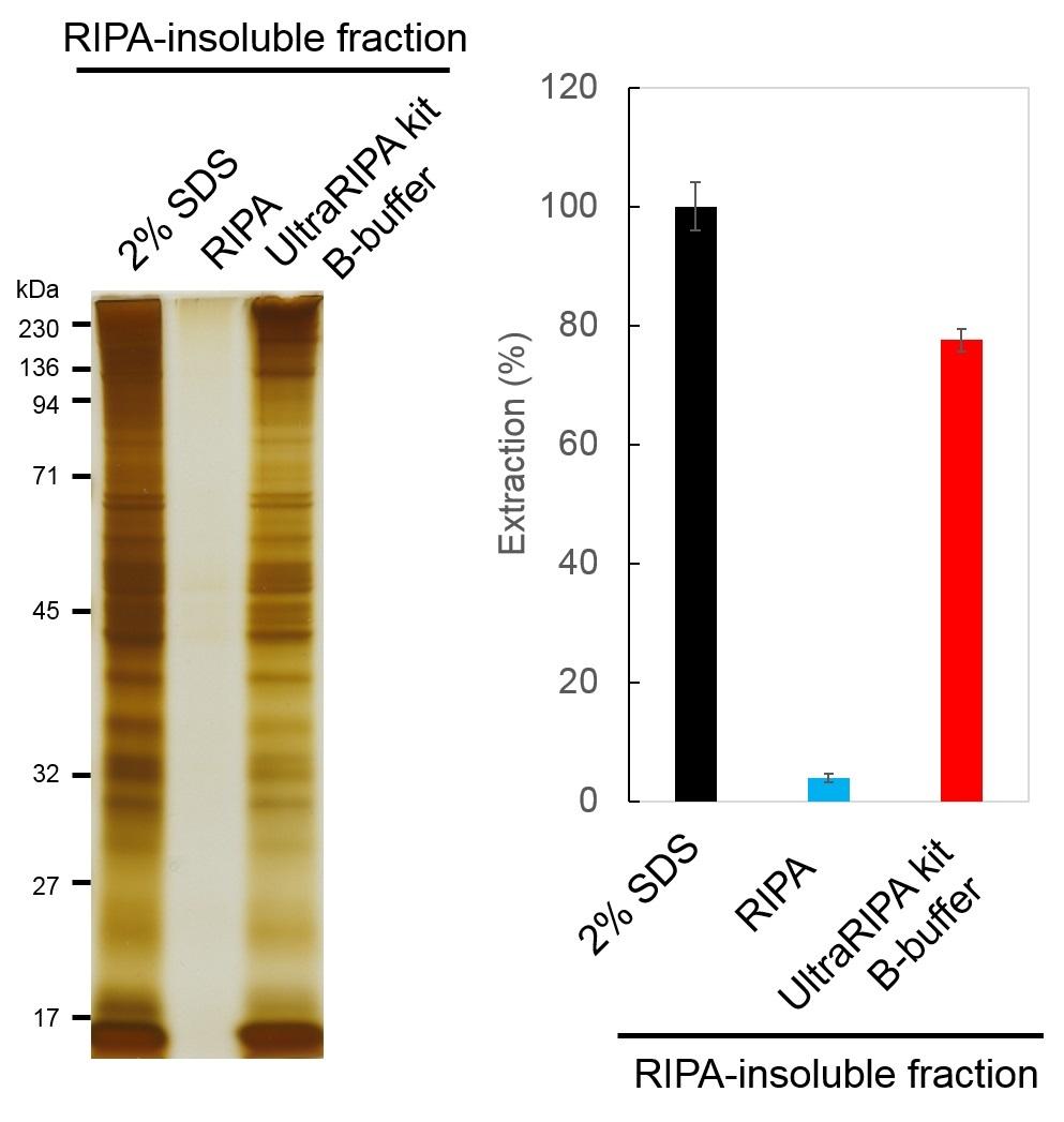 UltraRIPA 脂筏提取缓冲液套装                  UltraRIPA kit for Lipid Raft