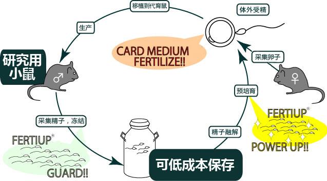 小鼠精子冻存液和体外受精培养基                  FERTIUP ®  &CARD MEDIUM ®