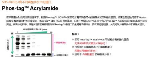 Phos-tag™ Acrylamide 5mM水溶液-价格-厂家-供应商-wko富士胶片和光