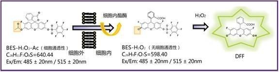 过氧化氢特异性荧光探针BES-H2O2(Cell-impermeant)-价格-厂家-供应商-wko富士胶片和光